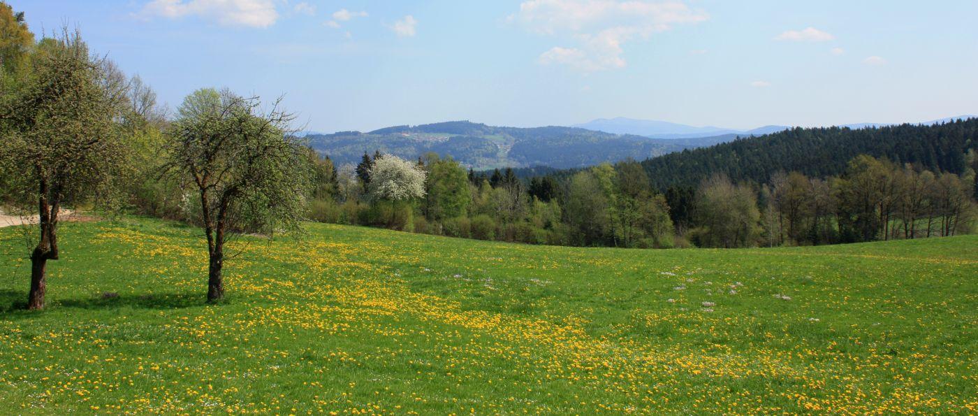 kopp-panoramabilder-bayerischer-wald-gruppenhaus-aussicht-1400
